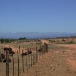 Mooi Plaas Guesthouse - farm